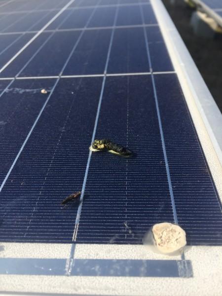 太陽光発電と鳥の糞