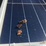 太陽光発電パネルの鳥の糞の対応方法