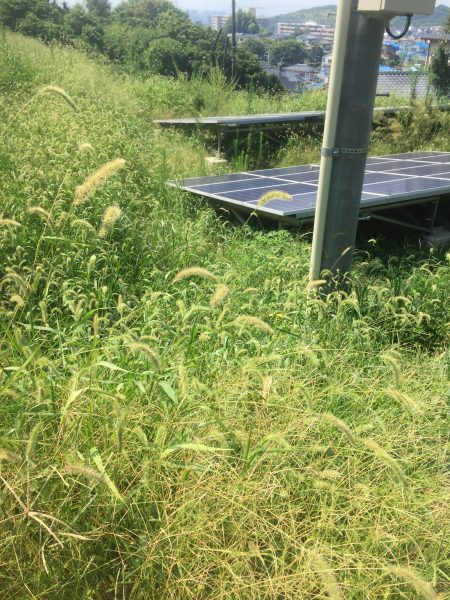 太陽光発電設備の除草作業