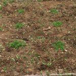 太陽光発電所の雑草対策クラピアK5